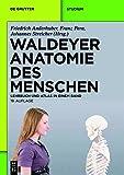 Waldeyer - Anatomie des Menschen: Lehrbuch und Atlas in einem Band (De Gruyter Studium)