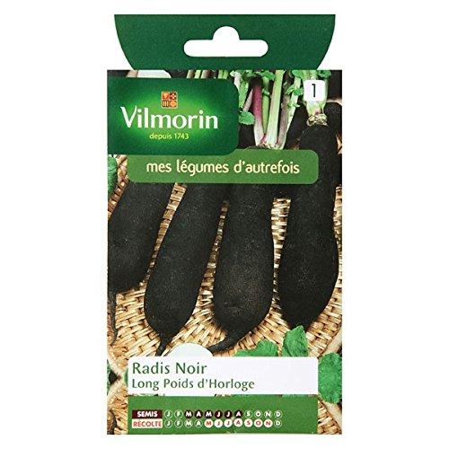 Vilmorin - Radis noir long poids d'horloge