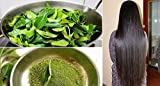 Best Curry Powders - Go Organic Curry Leaves Powder Curry Leaves To Review
