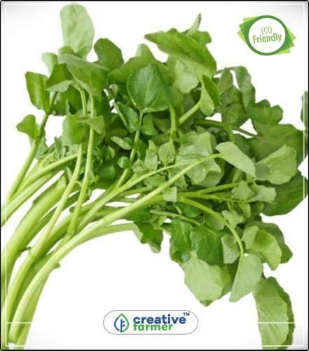Pinkdose Nasturtium officinale Kräutersamen für Küche Garten Küche Garten Pflanzensamen 20Indoor, Outdoor-Küche Garten Pflanzensamen Seed
