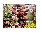 30x Mischung Schmetterlingsblumen speziell mix - Wiesenblumen Samen KS308