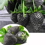Schwarze erdbeere samen