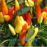SwansGreen Yellow : Rainbow Chili peppers seeds 100pcs Multi color Pepper seeds Interest Mini Garden Home Plant