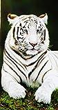 CONFORT HOME M.T. (90 X 170 CM) Toalla Playa -Grand Zoo*- Algodón 100% Estampada Tacto Suave + Pack Tobilleros RegalitosTV (253 Tigre Blanco)