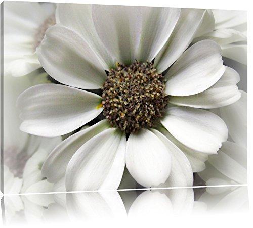 Pracht Gerahmt (Pixxprint kleine weiße zarte Blüte auf Leinwand, XXL riesige Bilder fertig gerahmt mit Keilrahmen, Kunstdruck auf Wandbild mit Rahmen, günstiger als Gemälde oder Ölbild, kein Poster oder Plakat)