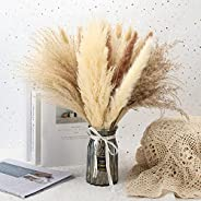 Natural Dried Pampas Grass 65pcs Boho Decor Pampas Grass Bundles Perfect for Home Wedding Decoration Kitchen D