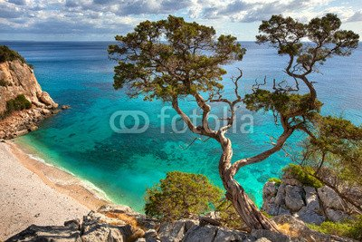 """Preisvergleich Produktbild Poster-Bild 140 x 90 cm: """"alter Baum - Sardinien"""", Bild auf Poster"""