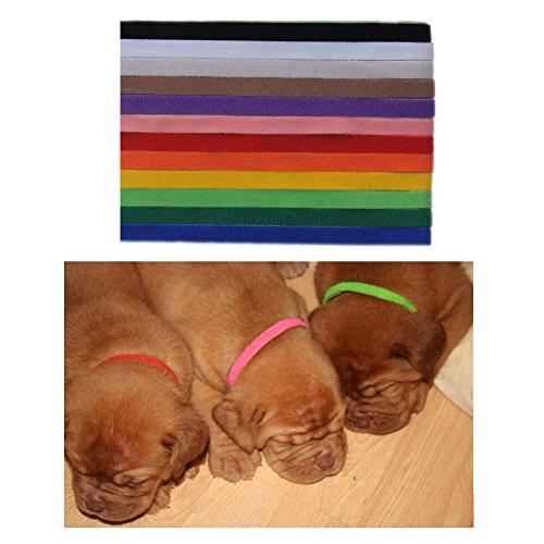 colliers-didentification-de-chiot-12-couleurs-velcro-12-piecies-vendues-ensemble