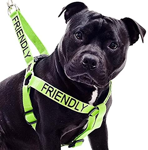 AMICAL Vert Couleur Coded Nylon non-Pull Grand L-XL Harnais (connu comme Friendly) prévient les accidents en avertissant les autres de votre chien à l'avance