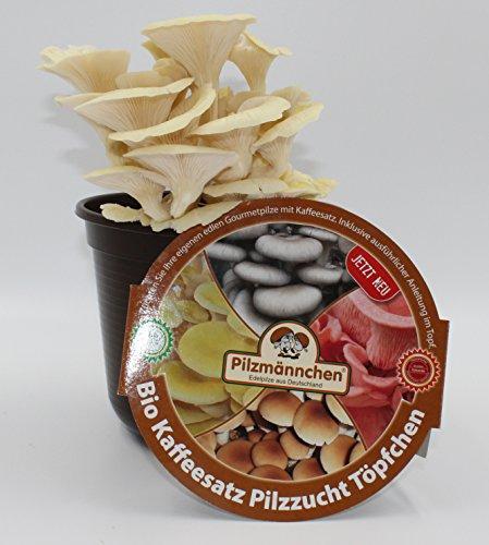 Limonenpilz Kaffeesatz Pilzzucht-Töpfchen Bio
