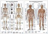 Doppelpack Anatomie-Poster: Jeweils ein Poster Skelett und Muskulatur