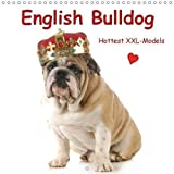 English Bulldog . Hottest XXL-Models (Wall Calendar 2018 300 × 300 mm Square) Dieser erfolgreiche Kalender wurde dieses Jahr mit gleichen Bildern und ... calendar, 14 pages ) (Calvendo Animals)