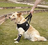Nature Pet Pfaff Premium Hunde Tragehilfe/Gehhilfe/Rehahilfe vorne L