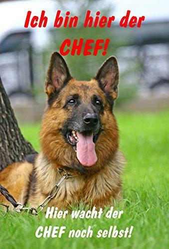 Schild Warnschild Achtung Schäferhund – Ich bin hier der Chef Hier wacht der Chef noch selbst - Hund Hundeschild 30x20cm Hartschaum Aluverbund -S28C