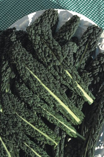 viridis-hortus-nero-di-toscana-borecole-curly-kale-750-25gs-vegetable-seeds