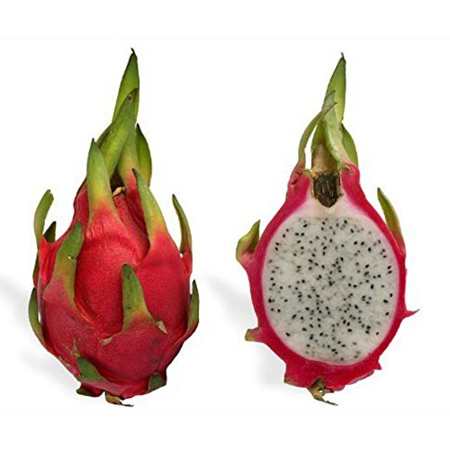 Galleria fotografica Bornbayb 100 pezzi White Dragon Fruit Seeds Semi di Hylocereus Pitaya
