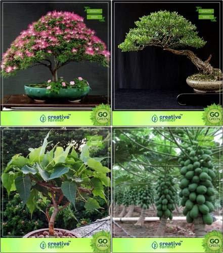 Pinkdose bonsai seeds: impianto per la casa