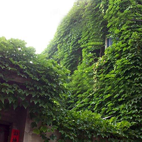 Grüner Fake Aufhängen