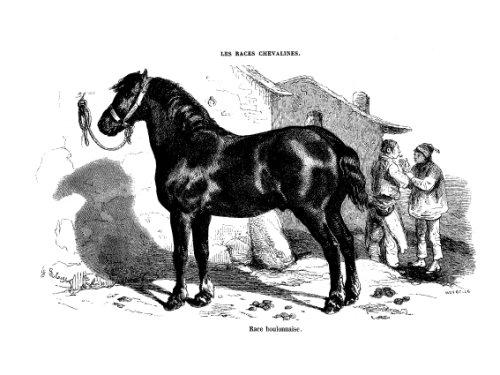 Les races chevalines - Gravure Cheval race Boulonnaise
