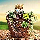 FANGff Blumentopf aus Kunstharz, Kaktus, Sukkulenten, Pflanzgefäß, Landschaft,...