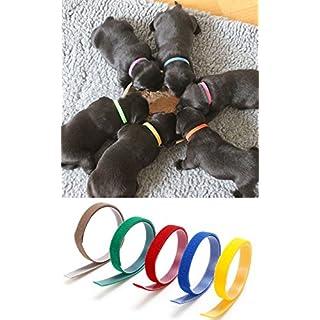 AIMADO Welpenhalsbänder Set für Züchter 12 Farben onesize verstellbare Länge für Hunde Katzen Kaninchen Kleintier Halsband