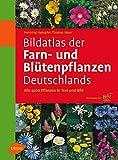 Bildatlas der Farn- und Blütenpflanzen Deutschlands - Henning Haeupler, Thomas Muer