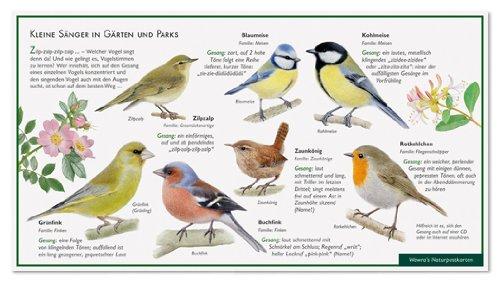Kleine Sänger im Garten – Singvögel – Vogelgesang – Wawra Naturpostkarte zum Entdecken, Beobachten, Bestimmen – 22 cm x 12 cm