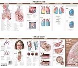 Medicine & Nursing Study Guides
