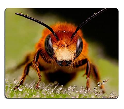 Bee Macro insects bugs wasps Mouse Pads Customized Made to