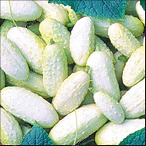 100 / pcs géant concombre semences super concombre Graines Bonsai Big concombre légumes Graines NON-OGM Graines bio pour jardin Graines Concombre
