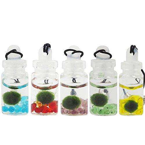 omem Mini Seaweed Kugeln Glas Flaschen, Glück Seaweed Ball Anhänger, Algen, Moos Kugeln Glas Aquarium Terrarium (Sky Blau)