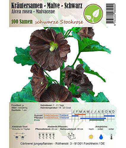 Kräutersamen - Malve/Malva - Malvaceae - verschiedene Sorten(Malve/Schwarze - Alcea rosea)