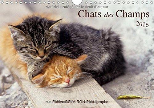 Chats des champs : 12 images de chats de campagne. Calendrier mural A4 horizontal PDF Books
