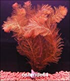 Wasserflora Rotes Tausendblatt