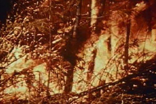 Preisvergleich Produktbild Classic Natural Disaster Films DVD: Footage Includes Tsunamis,  Volcanoes,  & Hurricanes