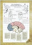 Poster Gehirn. Ein Handmodell von deinem Gehirn I