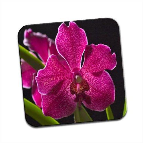 Hawaii Orchidea Magenta maculata e foglie verdi unico Coaster