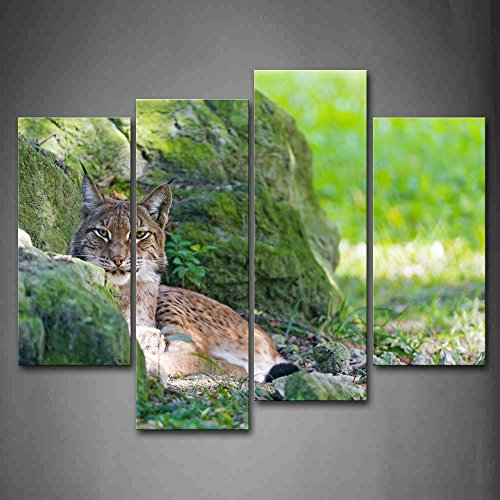 bobcat-sit-by-rock-on-grass-wall-art-painting-pictures-print-on-canvas-animal-the-picture-for-home-m