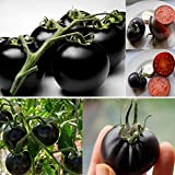 1 Pack 20pcs Rare Black Cherry Tomato Seeds Sweet Vegetable Fruit Seeds