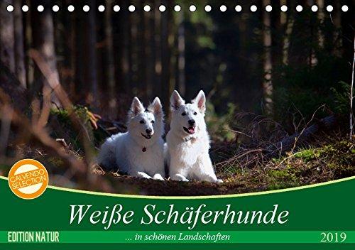 Weiße Schäferhunde in schönen Landschaften (Tischkalender 2019 DIN A5 quer): Weiße Schäferhunde präsentieren sich in bezaubernder Natur (Monatskalender, 14 Seiten ) (CALVENDO Tiere)