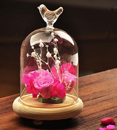 siyglass cristal campana cúpula terrario recipiente pantalla Miniatur
