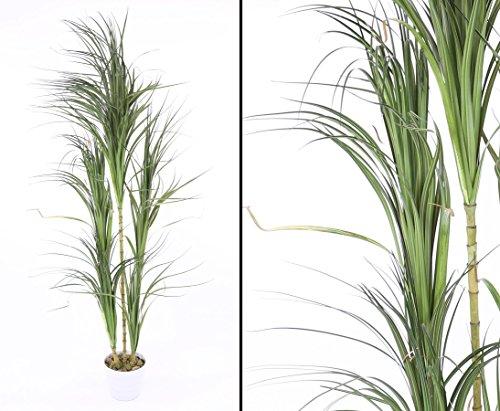 Dracena Kunstpalme mit 5 Köpfen 215cm - Kunstpflanze Kunstbaum künstliche Palmen Kunstpalmen Dekopalmen Palmen Palmbäume </p> -> großes Kunstpflanzen und Kunstpalmen Sortiment