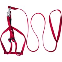 4EVER Nylon Adjustable Leash with Collar Set Printed Nylon Puppy Harness for Small & Medium Dogs Colour May Vary (0.75…