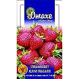 Strawberry Fruit 30 Seeds Pack (Omaxe Brand)