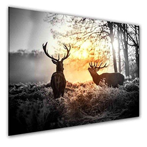 bilder-manufaktur-leinwand-kunstdruck-wandbild-bild-bilder-8065-farbe-2-70-cm-x-45-cm-hirsch-wald-hi