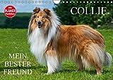 Collie - Mein bester Freund (Wandkalender 2019 DIN A4 quer): Eine der schönsten Hunderassen der Welt auf 13 zauberhaften Fotos (Geburtstagskalender, 14 Seiten ) (CALVENDO Tiere)