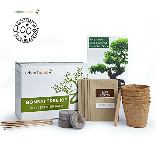 bonsai-tree-kit-grow-your-own-bonsai-tree-from-seeds-gift-set-includes-5-tree-varieties-to-plant-ind