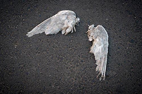 Legion: LA HISTORIA DE UN ANGEL CAIDO