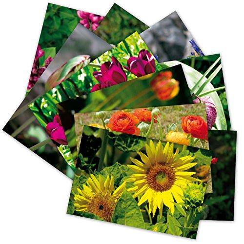 Tulpe Blüte (10 hochwertige Grußkarten