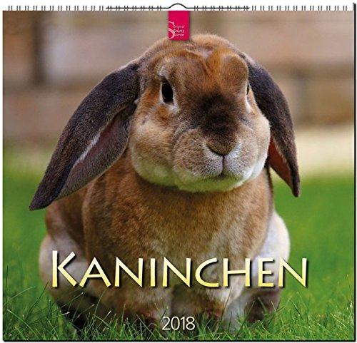 KANINCHEN: Original Stürtz-Kalender 2018 - Mittelformat-Kalender 33 x 31 cm